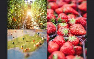 想去澳洲打工度假又怕遇到雷雇主?一起來看看獨家『菲+澳洲農場工作專案!』